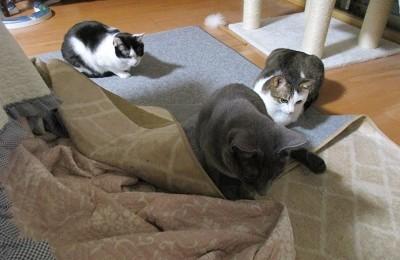 猫のぴいこ、ぷうこ、ちいちゃん