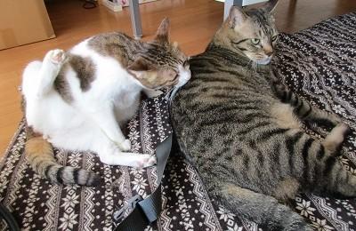 猫のマタくんとハナちゃん