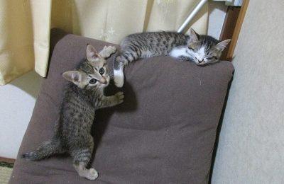 猫の蘭ちゃんと楓ちゃん