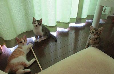 猫の琥珀くんと蘭ちゃんと楓ちゃん