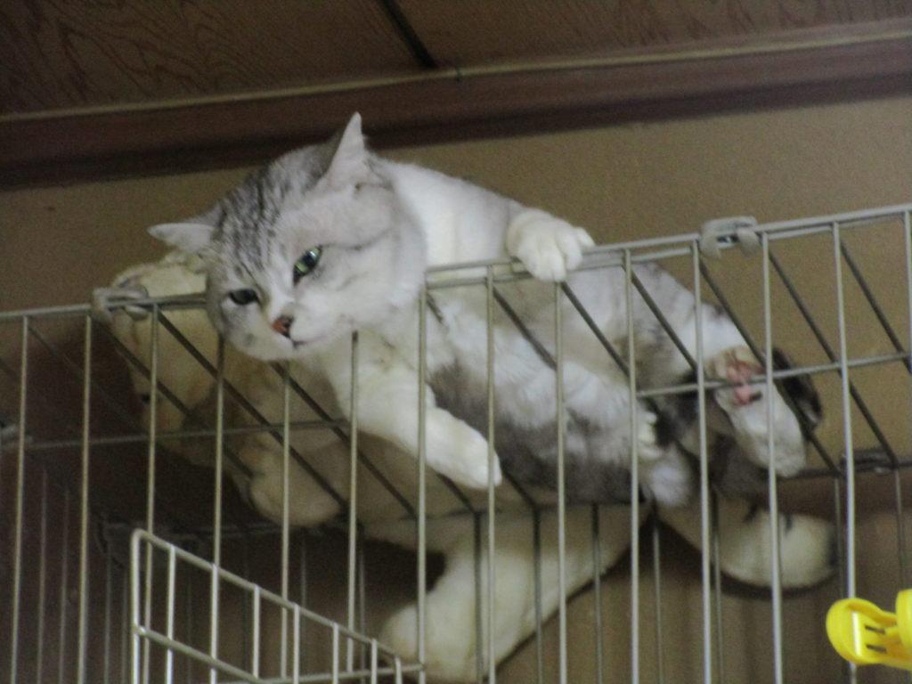 猫のゴロくん