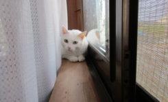 猫のきなこちゃん