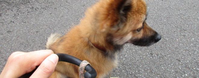 MIX犬のチャロくん